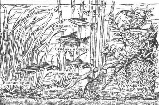 подкормка для карповых рыб